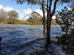 Main channel of the Murray River, just downstream of the Weir 20161003_111202 (heritagefutures) Tags: twelve gates hume dam southern albury flooding