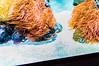pesce clown - Oceanario Lisbona (antoniosimula) Tags: oceanario lisbon lisbona lisboa portogallo portugal area expo fish flora fauna nikon d3200 35mm 70300 tamaron ocean species pacific atlantic indian