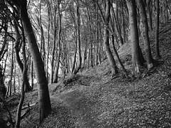 (ferrosplav) Tags: ruegen rgen baltic sea ostsee forest bw