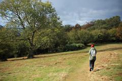 IMG_7188 (hudsonleipzig80) Tags: schwarzwald blackforest natur nature outdoor badenwrtemberg autumn herbst fall tree baum bume prechtal oberprechtal trekking wandern mountains mountain canon canoneos1200d eos1200d eos 1200d
