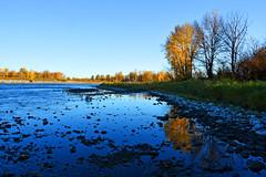 Fall morning on the Bow River. (GWP_Photo) Tags: calgary alberta bow river canada nikon d750 nikkor 1870 morning fall water tree
