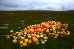 Samling ved Rifstangi (Martin Ystenes - hei.cc) Tags: sland iceland nordurland