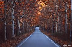 Autumn Road | Ohrid (Amer Demishi) Tags: autumn beautifulplace colorfulautumn fall macedonia ohrid nature