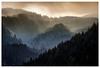 Dolomites VIII (::YS::) Tags: yann savalle yannsavalle alpha700 sony tyol tyrolean forest mountains novalevante nature trees fog morning