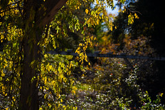 that Autumn glow (Dotsy McCurly) Tags: autumn glow glowing tree sky leaves nature beautiful dof bokeh nikon d750 nj