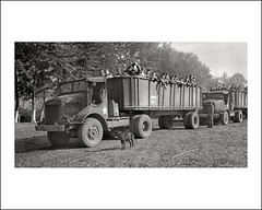 Vehicle Collection (7390) - ? (Steve Given) Tags: workingvehicle motorvehicle automobile truck lorry army soldiers military worldwartwo ww2 france 1940s transport demob