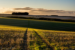 Last Light on the Wolds (Billy Clapham) Tags: nikond7100 nikon1024mm 1024 wideangle landscape autumn nature lincolnshire fields wolds rollinghills grass track goldenlight lastlight