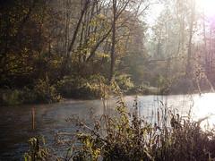 Morning elegance (velvetmeadow) Tags: river water forest autumnforest fall riverbank morning sunshine naturallight nature vilnel belmontas velvetmeadow