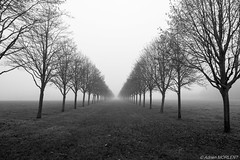 Perspective brumeuse (adrien.morlent) Tags: brume smog france french nb bw mysterieux paysage landscape perspective arbre