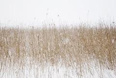 (Sameli) Tags: nature snow winter sea shore helsinki suomi finland