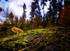 Forest walks (dRvECtoR) Tags: dualiso dual iso canon 6d magic lantern macro woods forest venus laowa 15mm wide angle close up closeup