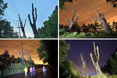IMG_CoupleTrees (Ethene Lin) Tags: 新中橫 塔塔加 夫妻樹 夜景 夜拍 背影