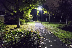 20161103_morning walk (Damien Walmsley) Tags: dark morning leaves light street lighting