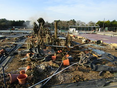 What used to be the cactus collection (wallygrom) Tags: england westsussex angmering manornursery manornurseries