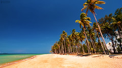clear blue sky (Hafiz.Soyuz.Photography) Tags: nature beach sand trees blue sky kgmangkok setiu terengganu nikon landscapes landmark village palm coconut green white