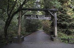 Muir Wood National Monument (dcnelson1898) Tags: muirwoodsnationalmonument marincounty california northerncalifornia forrest outdoors trees redwoods oak douglasfir canyon nationalpark nationalparkservice nps creek water
