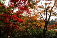 DSC02783 (MrSUIZOU) Tags: 京都 紅葉 北野天満宮 平野神社 十月桜