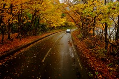 Autumns color (linwujin) Tags: japan asia maple tree yellow orange red road autumn color colorfull colour car rain fujifilm xt1 xf1655 leaf    landscape nature