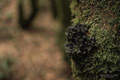 Liquen.jpg (ballende) Tags: forest bosque liquen humedad moss national park coquimbo chile microclima niebla parque ecosistema