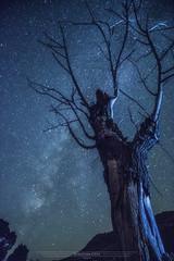 fotografia-via-lactea (sebastiancava) Tags: espaa de arbol lluvia via murcia cielo estrellas solitario lactea perseidas