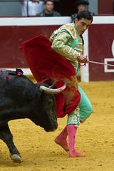DSC_9324.jpg (josi unanue) Tags: animal blood spain bull arena bullfighter sansebastian esp toro traje asta sangre espada bullring unanue guipuzcoa matador torero tauromaquia sufrimiento cuerno urea banderilla banderilero