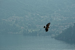 In volo (ghirolfo) Tags: panorama lecco falco