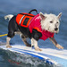 Surfs up, Paws up