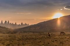 Atardecer en busca del camino (Oscar Ossorio) Tags: wedding light sunset horses love luz sol atardecer caballos amor inspiración
