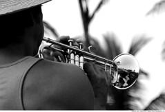 374 - Moliendo Cafe (Ata Foto Grup) Tags: music man reflection sexy male adam hat play cuba trumpet palmtrees shoulder palmiye halm yansıma trompet küba siyahbeyaz playingmusic erkek şapka müzik atlet omuz cafemoliendo