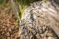 Hatfield_Forest-58 (Eldorino) Tags: park uk morning autumn trees nature forest sunrise landscape countryside nikon britain centre jour hatfield bishops stortford essex hertfordshire stanstead hatfieldforest