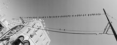 untitled-11-Edit (dvlmnkillatron) Tags: film 35mm panoramic fujifilm horizont selfdeveloped