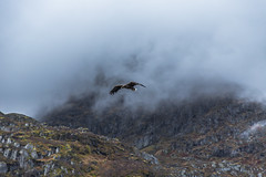 Sea-Eagle, Lofoten (cpphotofinish) Tags: ocean blue autumn light sky panorama mountain color colour reflection fall water rain weather norway clouds canon dark landscape outside island eos daylight norge photo reflex day skies foto image harbour outdoor panoramic norwegian nordic dslr scandinavia canondslr lofoten havn bilder vann bluelight skyer kaia hst hurtigruten landskap bilde seaeagle svolvr norske farger mk3 nordland trollfjord skandinavia svinya f4l canonef ef24105mmf4lisusm carstenpedersen canonmkiii mklll canon5dmk3 eos5dmk3 verdensvakrestesjreise cpphotofinish canonredlable