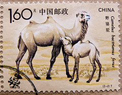 great stamp China 1.6Y (wild bactrian camel, Camelus bactrianus ferus, Wildkamel, Trampeltier, camello bactriano, Kétpúpú teve, cammello, Wielbłąd dwugarbny, 野駱駝, Çift hörgüçlü deve, Двугорбый верблюд) People's Republic of China PRC timbre Chine postage (stampolina, thx for sending stamps! :)) Tags: china wild brown animal animals postes tiere asia asien stamps stamp porto braun timbre postage franco chine kamel wüste selo bolli cammello sello bactriancamel briefmarken markas pulu trampeltier 邮票 frimærker timbreposte francobolli bollo pullar timbresposte 우표 znaczki frimaerke wildkamel camellobactriano почтоваямарка camelusbactrianusferus kétpúpúteve wielbłąddwugarbny двугорбыйверблюд çifthörgüçlüdeve γραμματόσημα postapulu yóupiào postetimbre ค่าไปรษณีย์ bélyegek postaücreti postestimbres 野駱駝