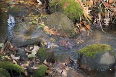 Creek (GSankary) Tags: fall farm farms ruralscenes farmscenes