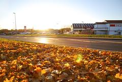 Gegenlicht (fakepixilord) Tags: orange lens timelapse nikon autum laub herbst sunny frame flare sonnig sonne gegenlicht rewe strase grell d80 zeitraffer
