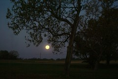 DSC00448 (carrie_20001jf) Tags: supermoon moon morning night astronomy texas sky texassky supermoon2016 2016 skyporn nature texasnature