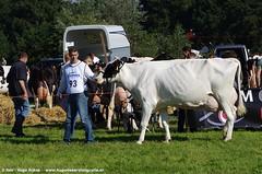 IMGP4866-370 (hugomekersfotografie) Tags: delta hugo dieren crv koeien boerderij 2015 boeren veehouderij brownswiss roodbont veeteelt tractoren rundvee zwartbond rijkse streeknieuws hugomekersfotografie fokveedageibergen