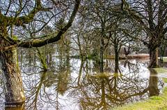 Too Much Rain!! (BGDL) Tags: trees landscape flooding lochlomond cameronhouse nikond7000 afsnikkor18105mm13556g bgdl lightroomcc