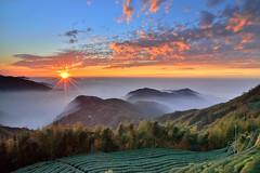 大崙山~茶園夕彩~ Tea fields Sunset (Shang-fu Dai) Tags: sunset sky clouds landscape nikon taiwan 南投 formosa 台灣 日落 d800 火燒雲 銀杏森林 夕彩 afs24120mmf4 武岫 大崙山觀光茶園