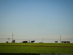 samsebeskazal.livejournal.com-04935.jpg (samsebeskazal) Tags: unitedstates pennsylvania farm amish lancaster lancastercounty buggy pennsylvaniadutch birdinhand