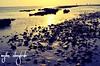 Golden Light (wejdanalmaghrabi) Tags: jeddah sea beach stones sunny sunlight بحر جدة شاطئ احجار نهار شمس مشمس morning