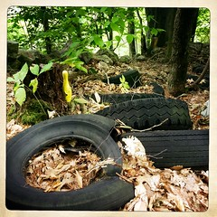 Should I pick up the spare or a spare? (DjD-567) Tags: old tires junk bowlingpin yellow woods nh trail discarded rot
