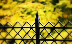 _castle fence (SpitMcGee) Tags: hff happyfencefriday schlossaugustusburg unescowelterbe brühl nrw germany spitmcgee explore 39