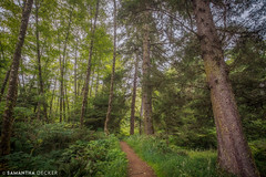 A Quiet Path in the Woods (Samantha Decker) Tags: canonef1635mmf28liiusm canoneos6d hdr highdynamicrange or oregon oswaldweststatepark pnw pacificnorthwest samanthadecker wideangle