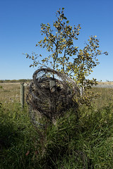 Well Protected (brentus69) Tags: alberta canada farm country nature harvest pipestonecreektrail nikon d4 nikond4 tree fence barbedwire