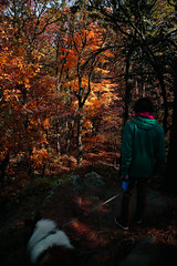 7Q7A6222 (armincreates) Tags: nature fall colors trees lake mountains hike dog puppy beauty trail panorama sunset cows farm wisconsin illinois usa walk