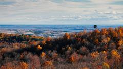 Lone Tree Escaping the Autumn Colours (Derrick.Midwinter) Tags: gatineau autumn orange fall hiking canada ottawa trees wolftrail