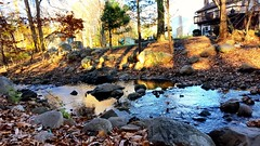 My Backyard (SurFeRGiRL30) Tags: brook mollyannesbrook nj beautiful trees water rushingwater reflection nature fall autumn peaceful rocks house houses neighbors creek steppingstones blue pretty natural woods leaves stream