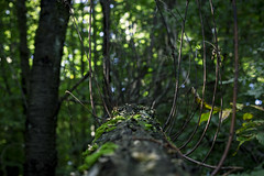 Log (Jan Ehrlich) Tags: baum tree stamm stump herbst fall wallpaper dektop saarland