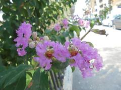 017 (en-ri) Tags: fiori fiorellini rosa sony sonysti flowers